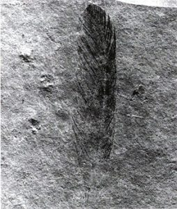 Archaeopteryx_lithographica